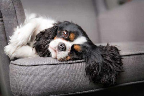 bobby-overleden-hond-kunst-fotobewerking