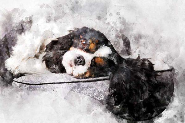 aandenken overleden hond