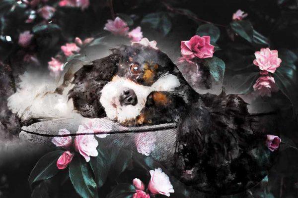 fotobewerking overleden dieren