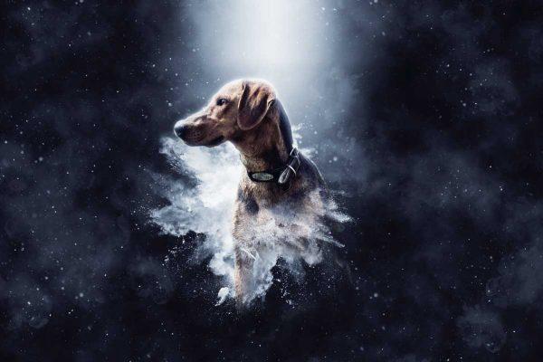 herdenking overleden hond