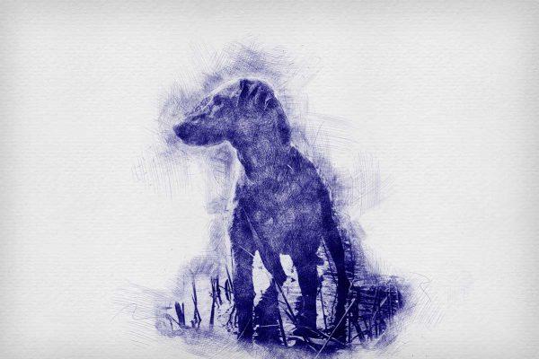 herinnering overleden hond