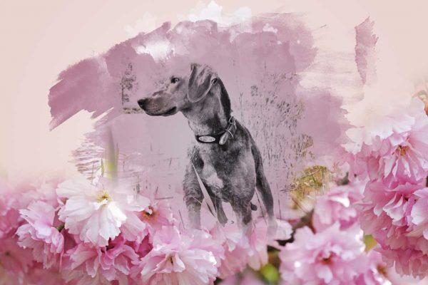 kunst overleden hond